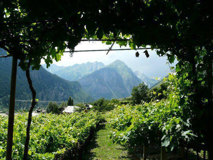 La Route des Vins du Mont-Blanc