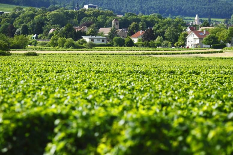 le village de Gevrey-Chambertin au milieu des vignes bourguignonnes