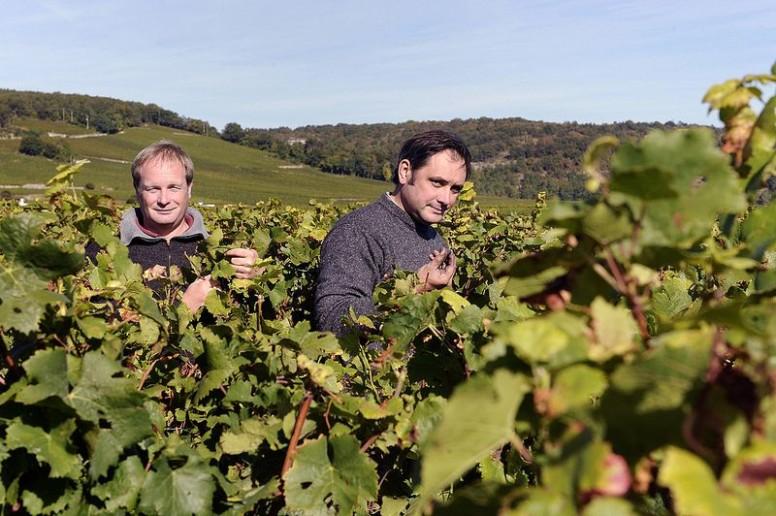 Yves et Jean-Pierre Confuron dans leurs vignes - Domaine Confuron-Cotetidot - Crédit photo Marie-Eve Brouet