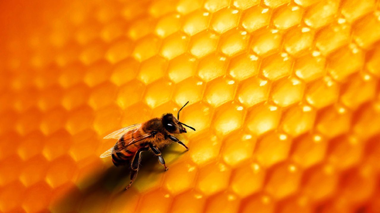 Naturel et gourmand le miel en a sous la ruche arts - La ruche a miel ...