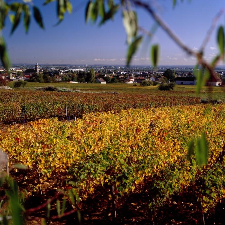 Marsannay, vignoble de la Cote de Nuits