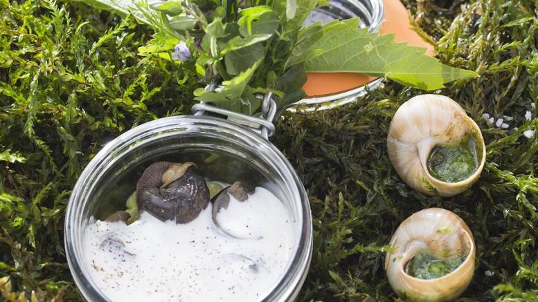 Escargots de Bourgogne en coquille & en cocotte d'orge perlé