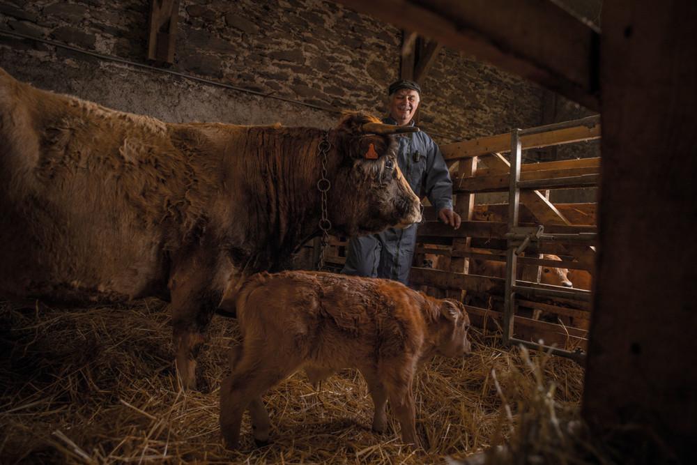Chez Christian, chaque vache a sa propre histoire. Certaines ont jusqu'à 17 ans.