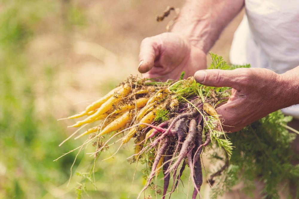 Ce ne sont pas moins   de 250 variétés de fruits et légumes qui sont  récoltés chaque année par le maraîcher.