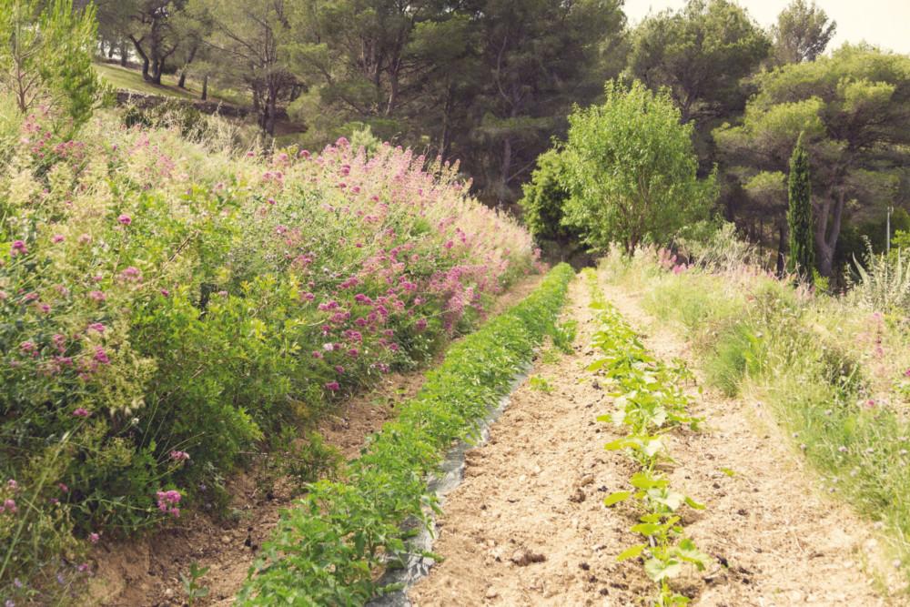Sur ses 8000 m2 de terres, Jean-Baptiste Anfosso applique le principe de la permaculture. Il favorise la biodiversité et l'utilise aucun herbicide, ni pesticide.