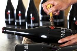 château malherbe à bormes-les-mimosas, aoc côte de provence, var, vin