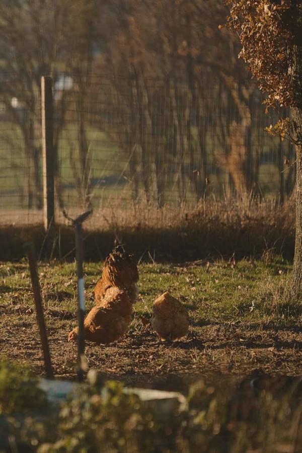 Parti de rien, ce  fils d'aubergiste un tantinet rebelle a su faire de son terroir sa poule aux œufs d'or.
