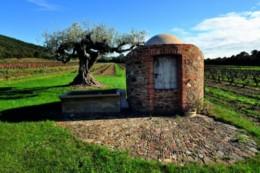 Château malherbe en côte de provence, vin rouge blanc rosé famille ferrari à Bormes les mimosas