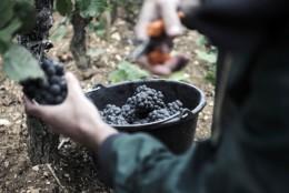 Domaine Jean-Luc et Paul Aegerter producteur éleveur négociant de vin rouge et blanc en Bourgogne. Présent à Nuits Saint Georges. Vendanges 2017 de la vigne à la cuve