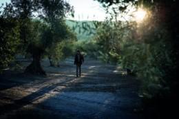 Alexis Munoz, Producteur d'huile d'olive et passionné de cette huile. Huiles d'olives provenant d'espagne essentiellement et haut de gamme. 18:1. Vente en ligne des huiles aux particuliers et professionnels