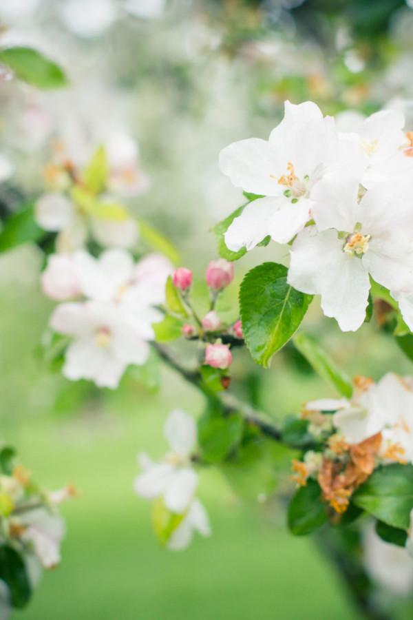 Une belle floraison est le signe d'une récolte généreuse.