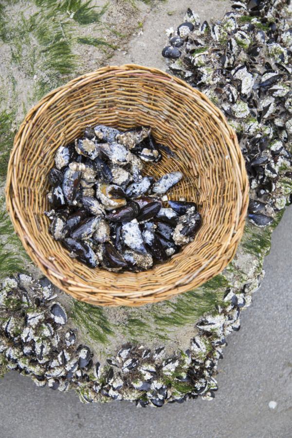Sur la baie, la pêche aux moules ne doit pas dépasser 5 L par marée.