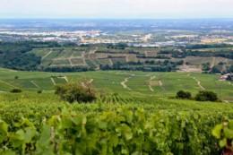 Domaine Corsin Saône et Loire